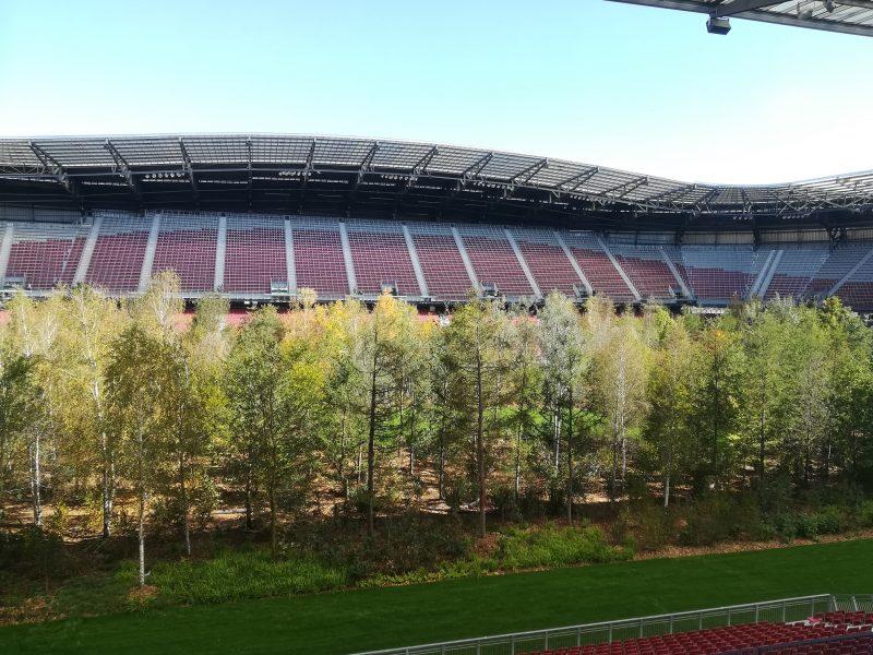 Der Wald am Fußballrasen